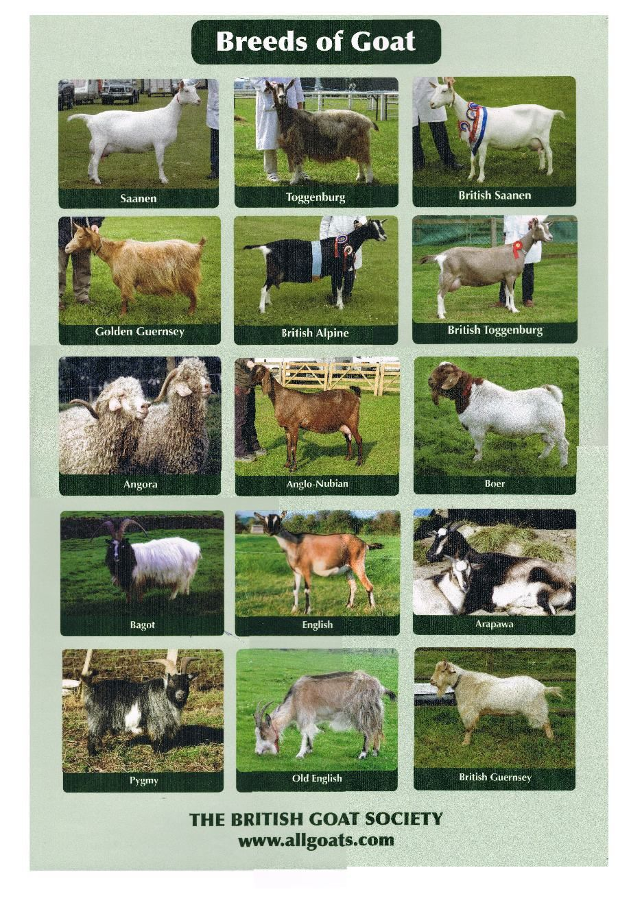 goat breeds with pictures on a poster | Copyright © All