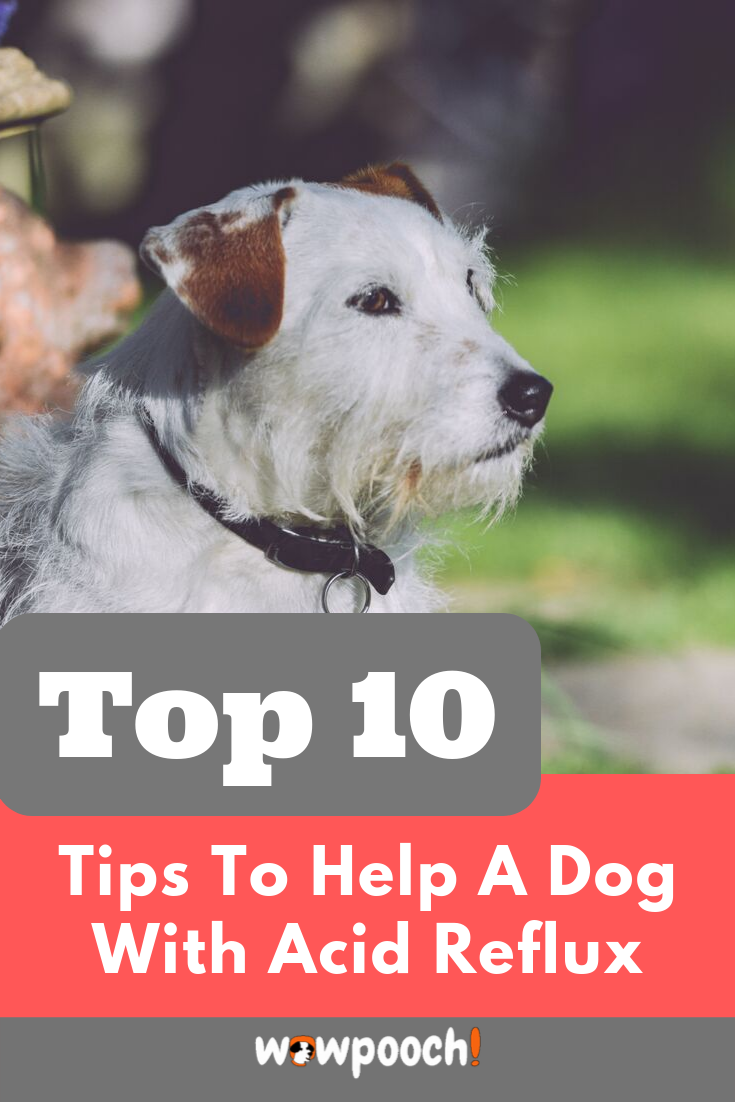 Pin On Dog Articles