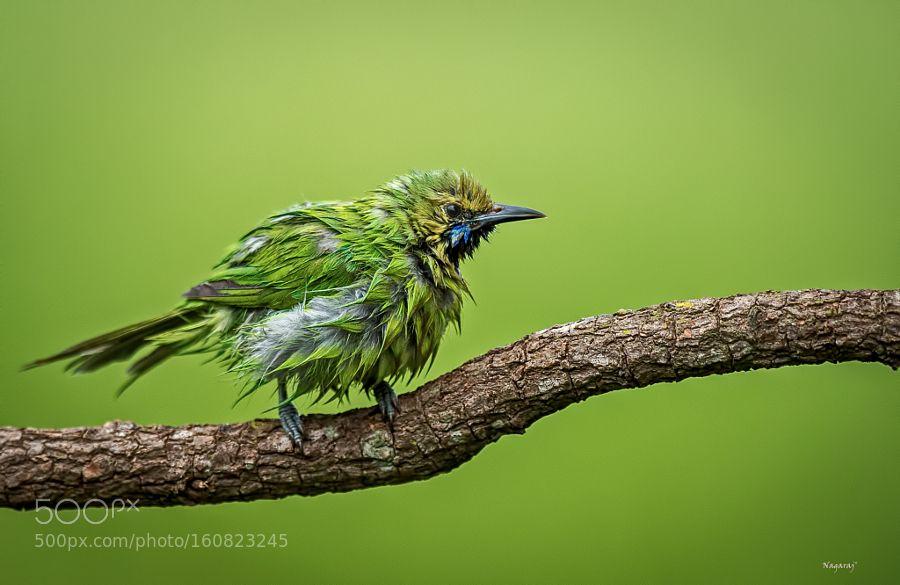All in green by DrNagaraj via http://ift.tt/292ZTB5