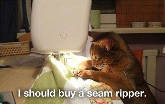 Ommmmmy Catnipppppp Ommmmmmy Catnippppppppppp Ommmmmm Cute Animal Photos Adorable Cute Animals Cats
