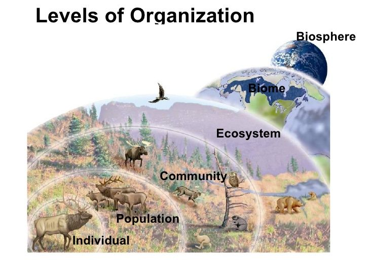 Levels Of Organization Ecosystem Community Population