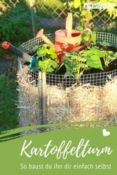 Photo of Récoltez les pommes de terre dans le plus petit espace – avec la tour de pommes de terre Si vous …