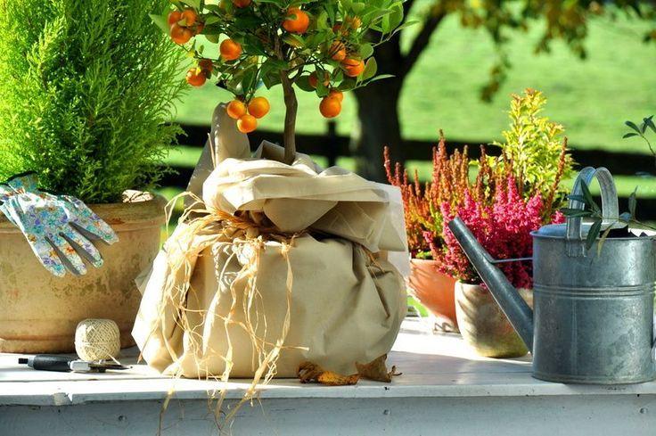 Der Garten im November: Endspurt vor dem Winter #herbstdekoeingangsbereich Herbs... #herbstdekoeingangsbereichdraussen