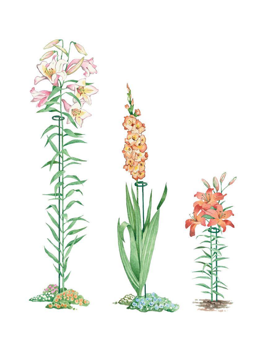 Single Stem Flower Supports 24 To 46 Gardener S Supply Plant Supports Garden Supplies Flower Branch