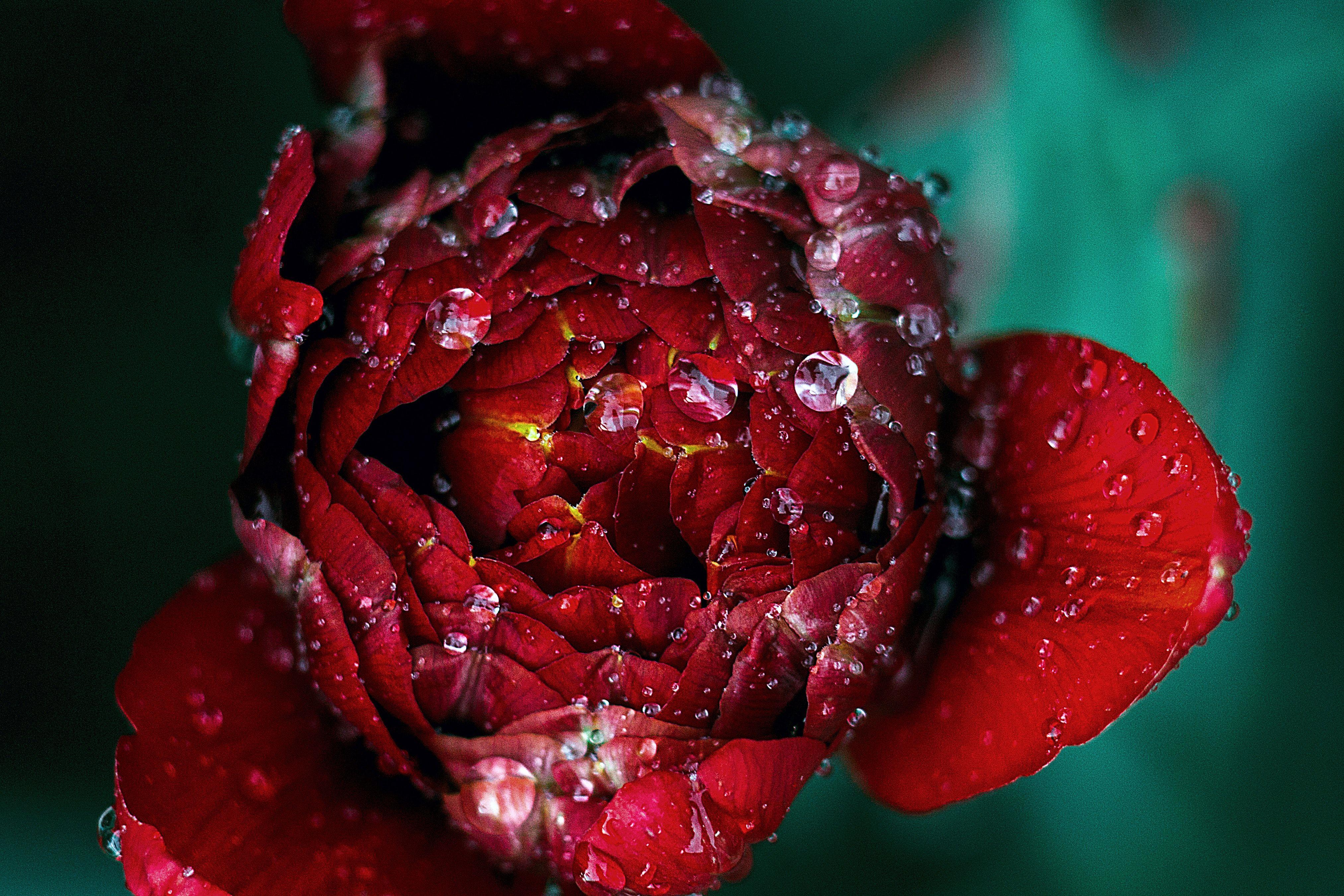 Прикольные картинки красного цвета