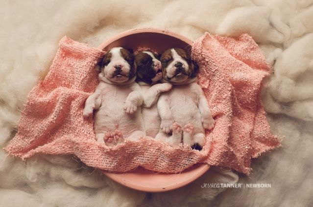 Puppy Newborn Goodness Puppy Photography Newborn Animals