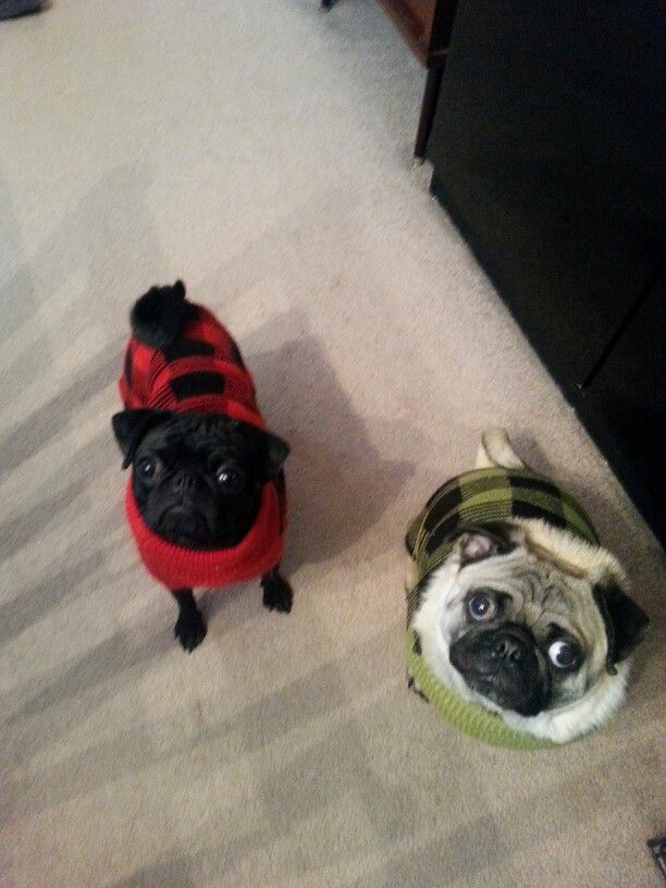 Wednesday and Pugsly