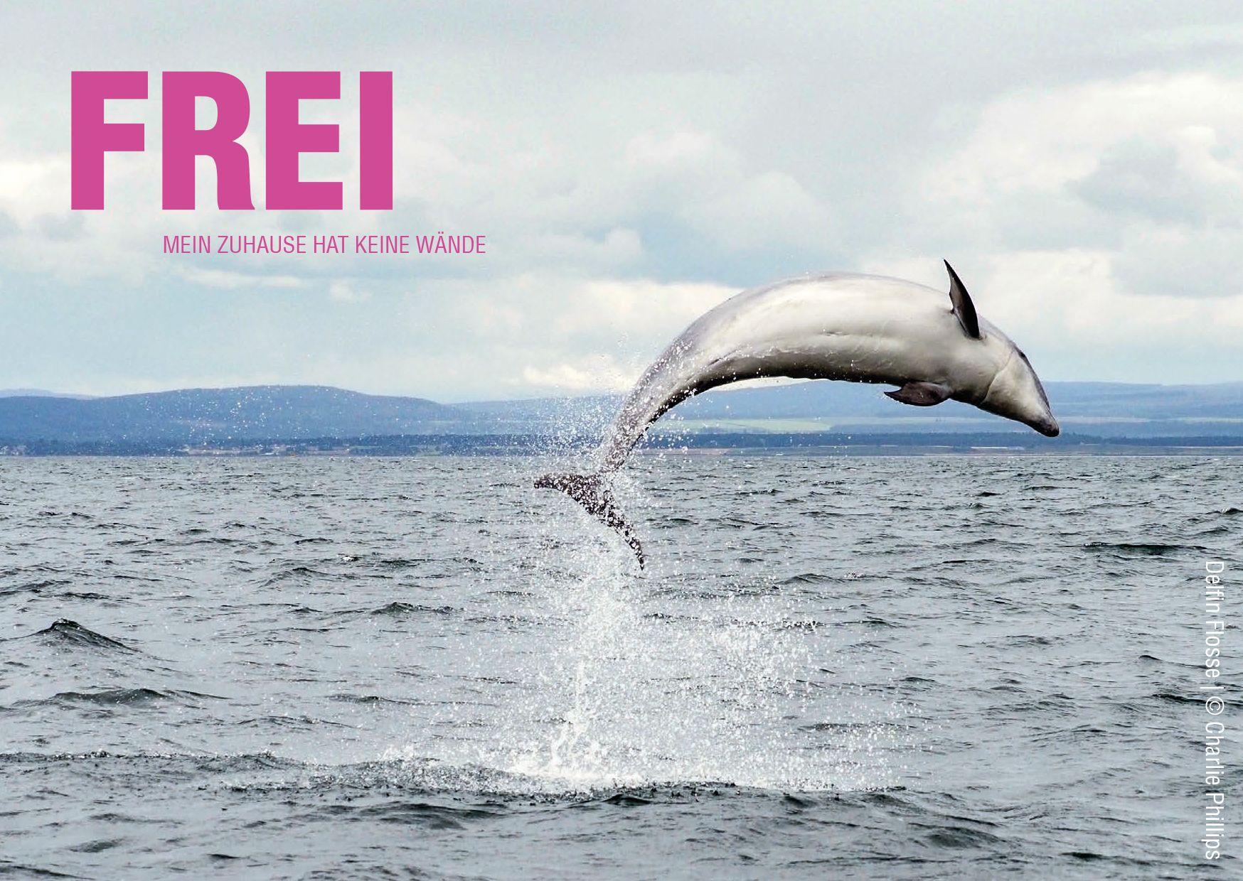 Petition: Für ein Deutschland ohne Delfinarien! Zucht und Transporte von Delfinen einstellen!
