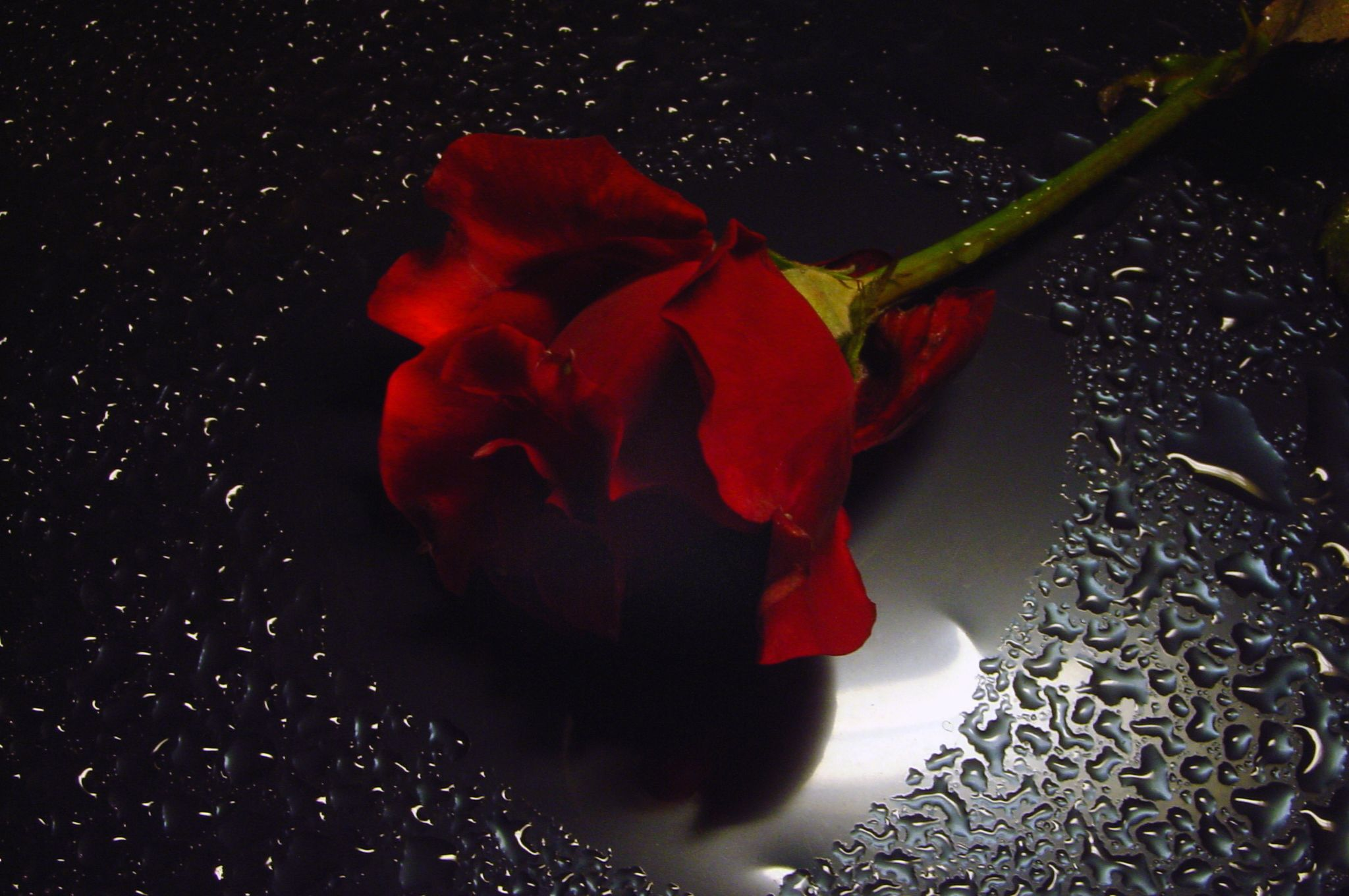 Awesome Fabulous Red Rose Water Drops Red Roses Flowers Black Background Black And Red Roses