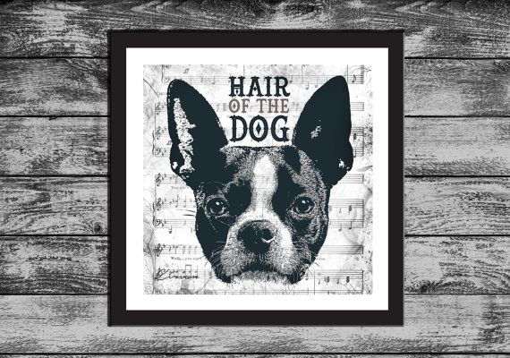 Boston Terrier  ART print  Hair of the DOG  Party by KirianGallery