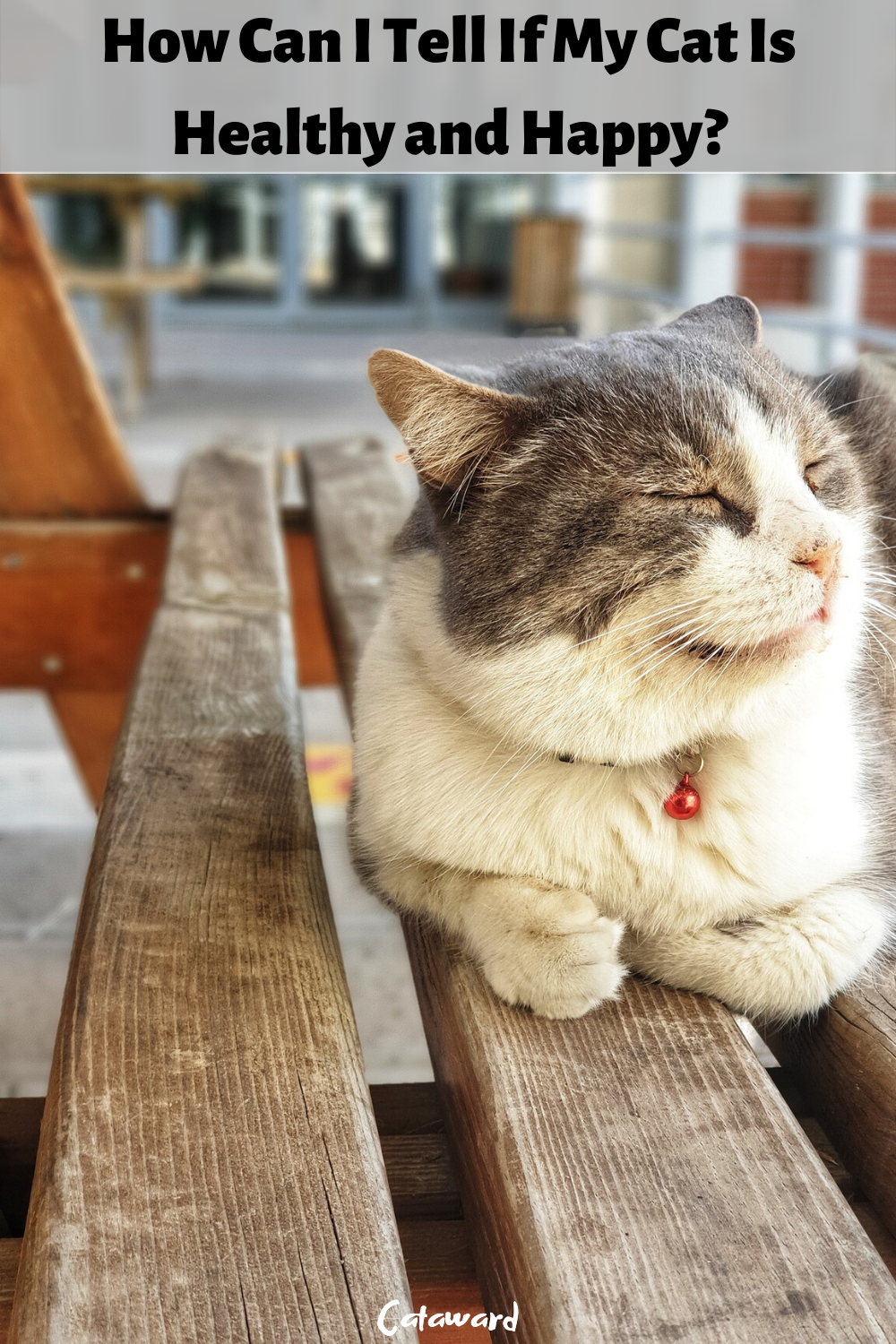 How can I tell if my cat is healthy and happy? Read