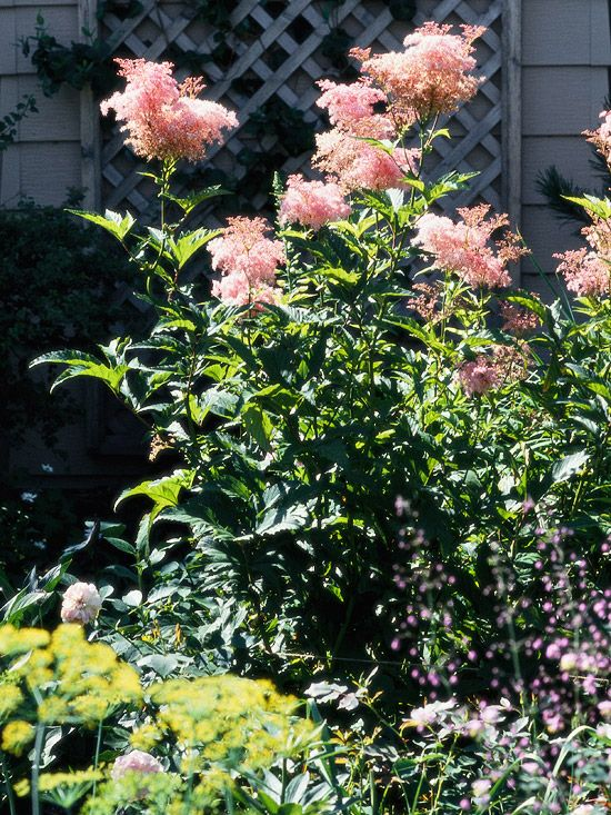 Pin On Garden Plants Yards Landscaping