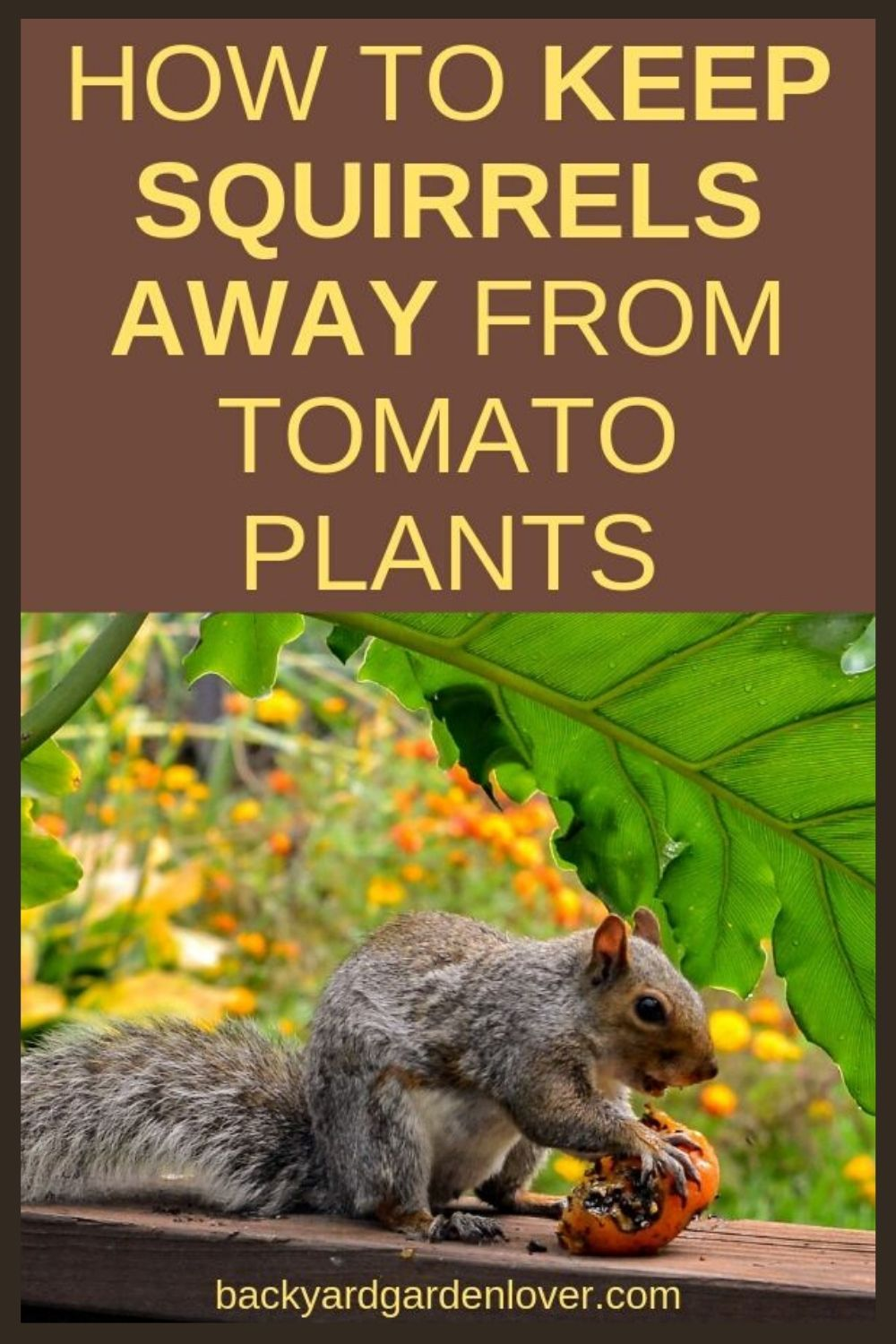 How To Keep Squirrels Away From Tomato Plants