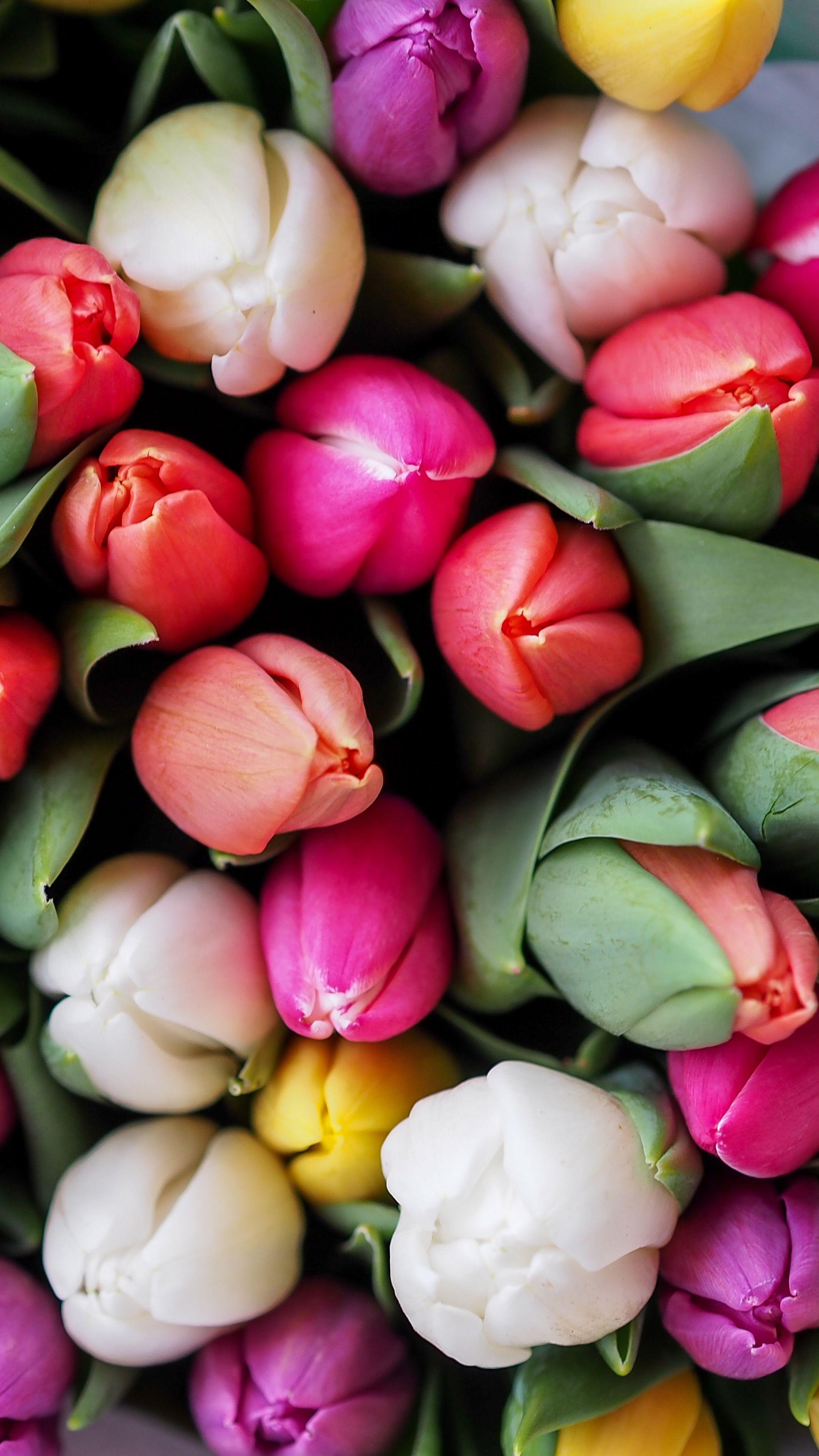 Картинки для айфона цветы