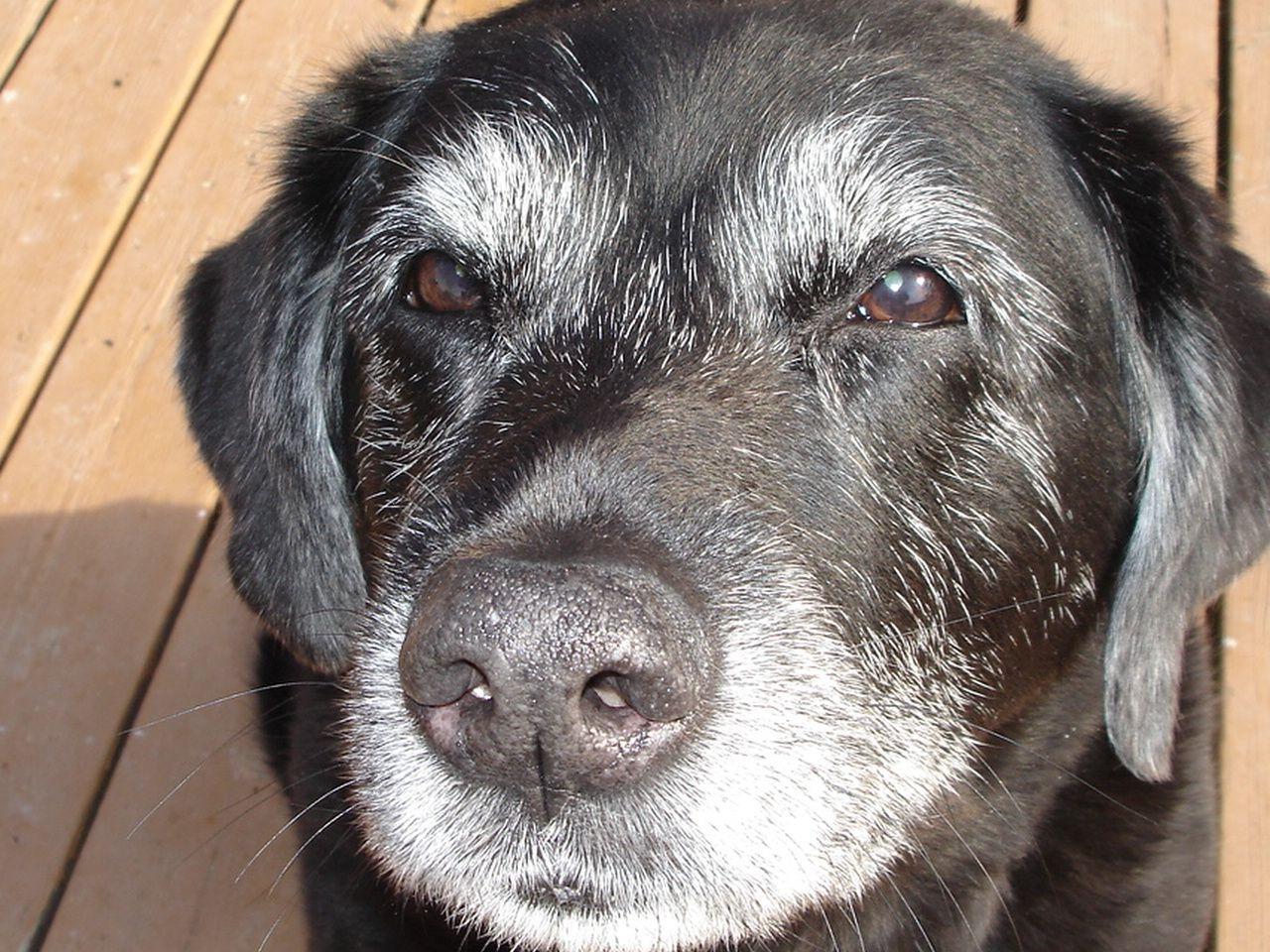 Homemade dog food dehydrated dog food is an easy nutritious homemade dog food dehydrated dog food is an easy nutritious high quality way forumfinder Choice Image