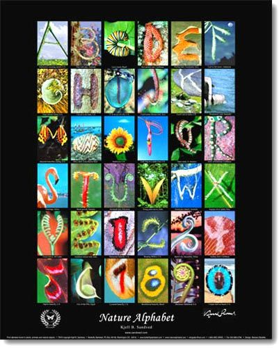 Nature Alphabet Nature Letters Butterfly Poster Alphabet Poster
