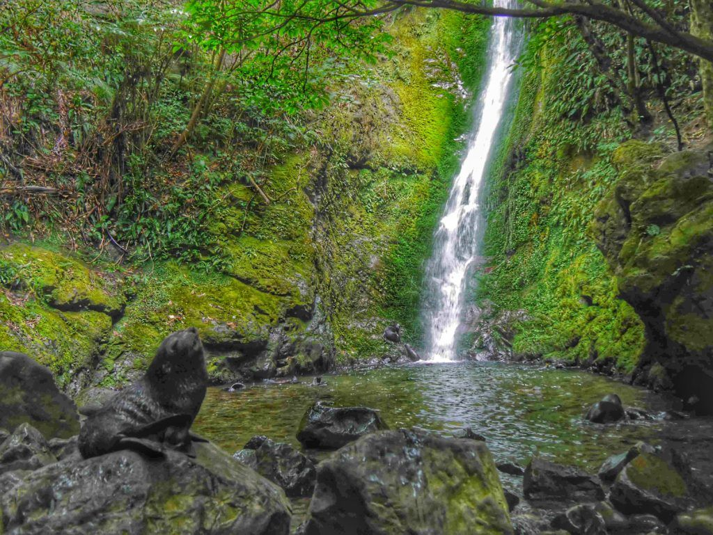 Ohau Stream Walk Oahu Falls