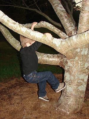 Auf Bäume klettern