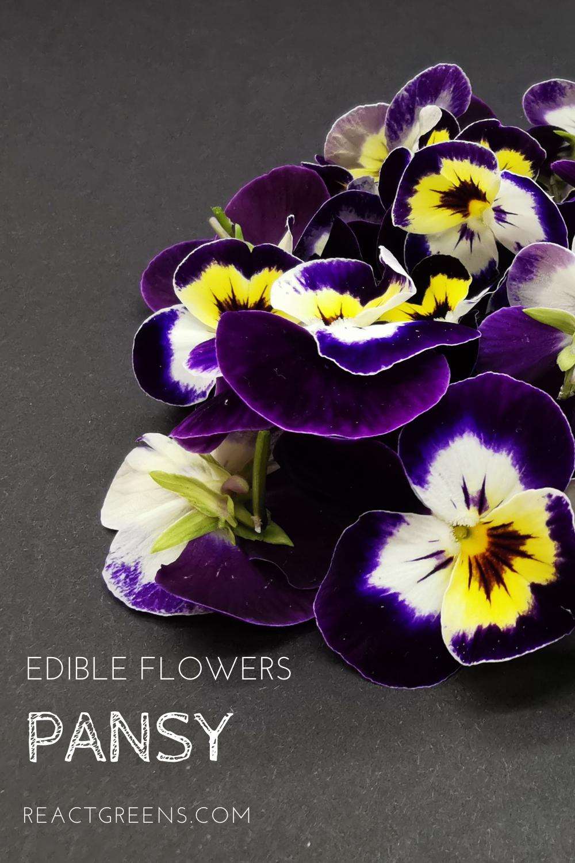 Edible Flower Pansy In 2020 Edible Flowers Pansies Edible Flowers Cake