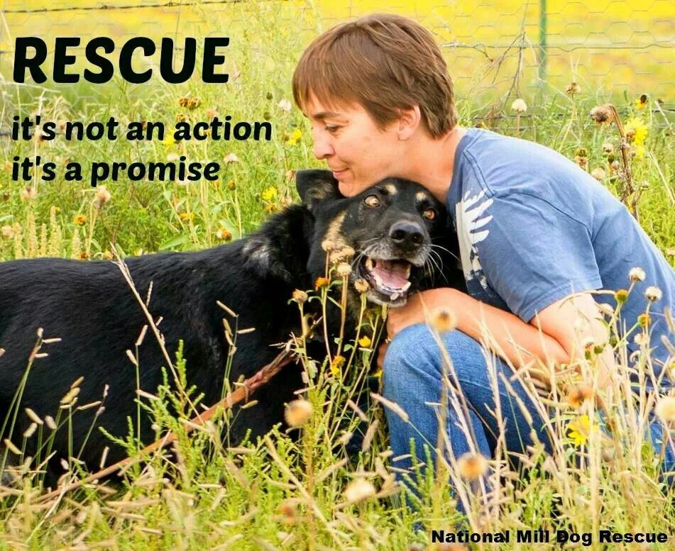 Rescue dogs by Wendy Carroll on pet care