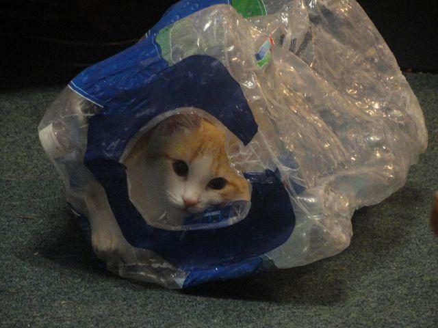 非表示に猫の写真