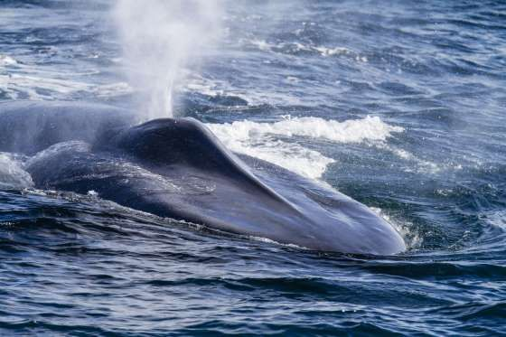 38++ Whales blowhole ideas