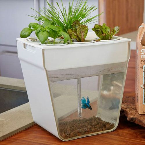 Aquafarm hydroponic indoor fish and food tank grow basil for Hydroponic fish tank