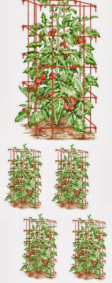 Tomato Cages Support Heavy Yields