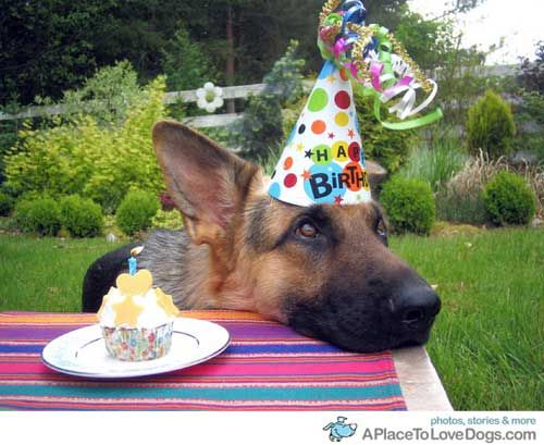 17 Best images about Birthday Dog – German Shepherd Birthday Cards