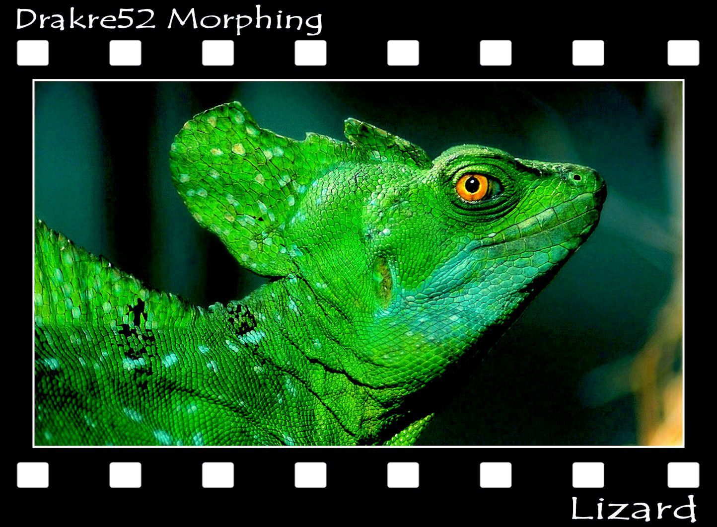 """Lizard Morphing Beautiful photos of lizards that blend together, using Morphing. Music framed with the song: """"The old world"""" by Karpa Watch: https://www.facebook.com/Drakre52/videos/801037290023856/ or https://youtu.be/-lls04QTTr0"""