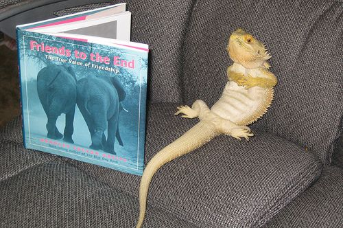Image result for bearded dragon lizards reading books