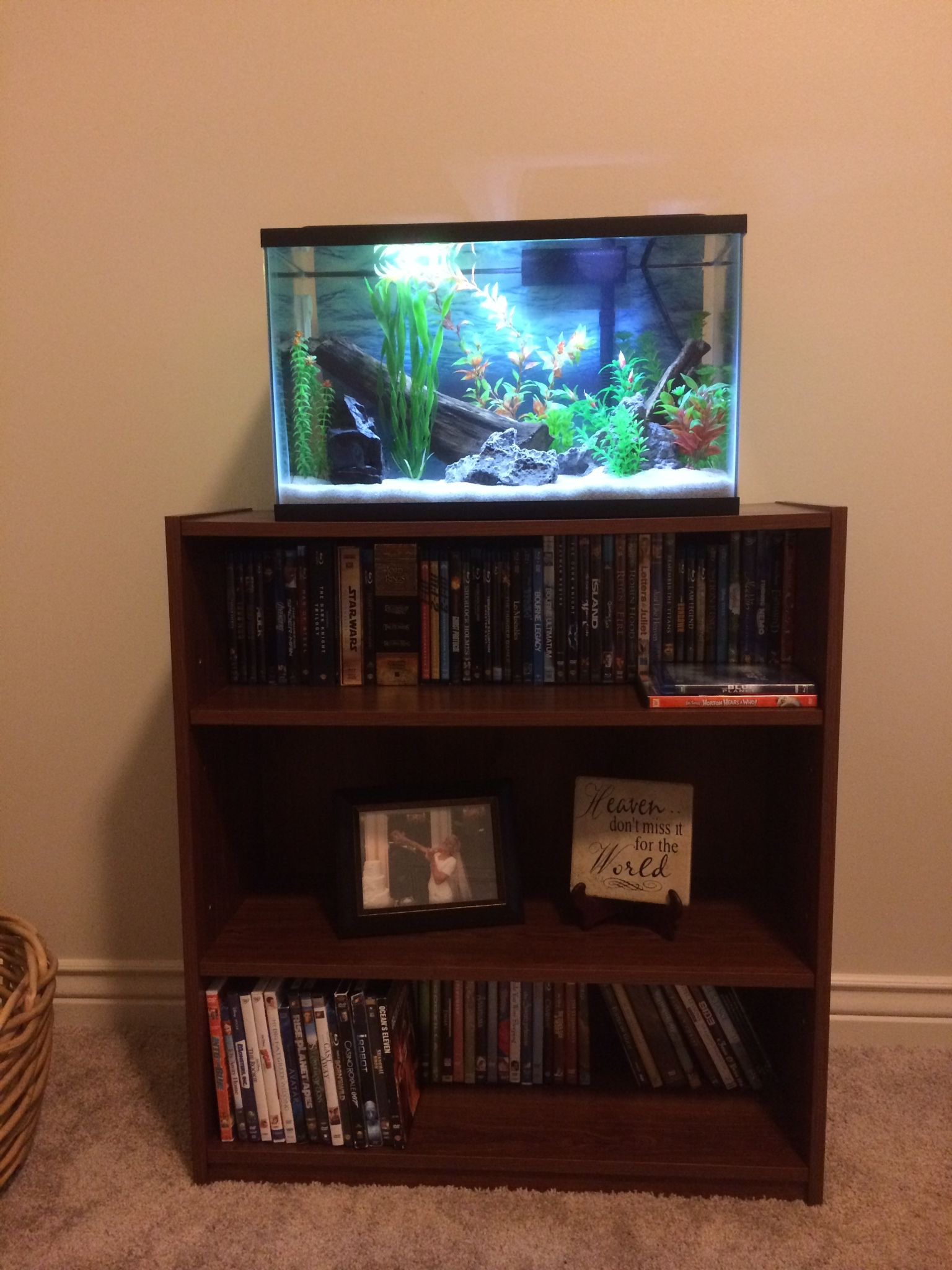 10 Gallon Tank On Bookcase Stand 10 Gallon Fish Tank Fish Tank Stand Tank Stand