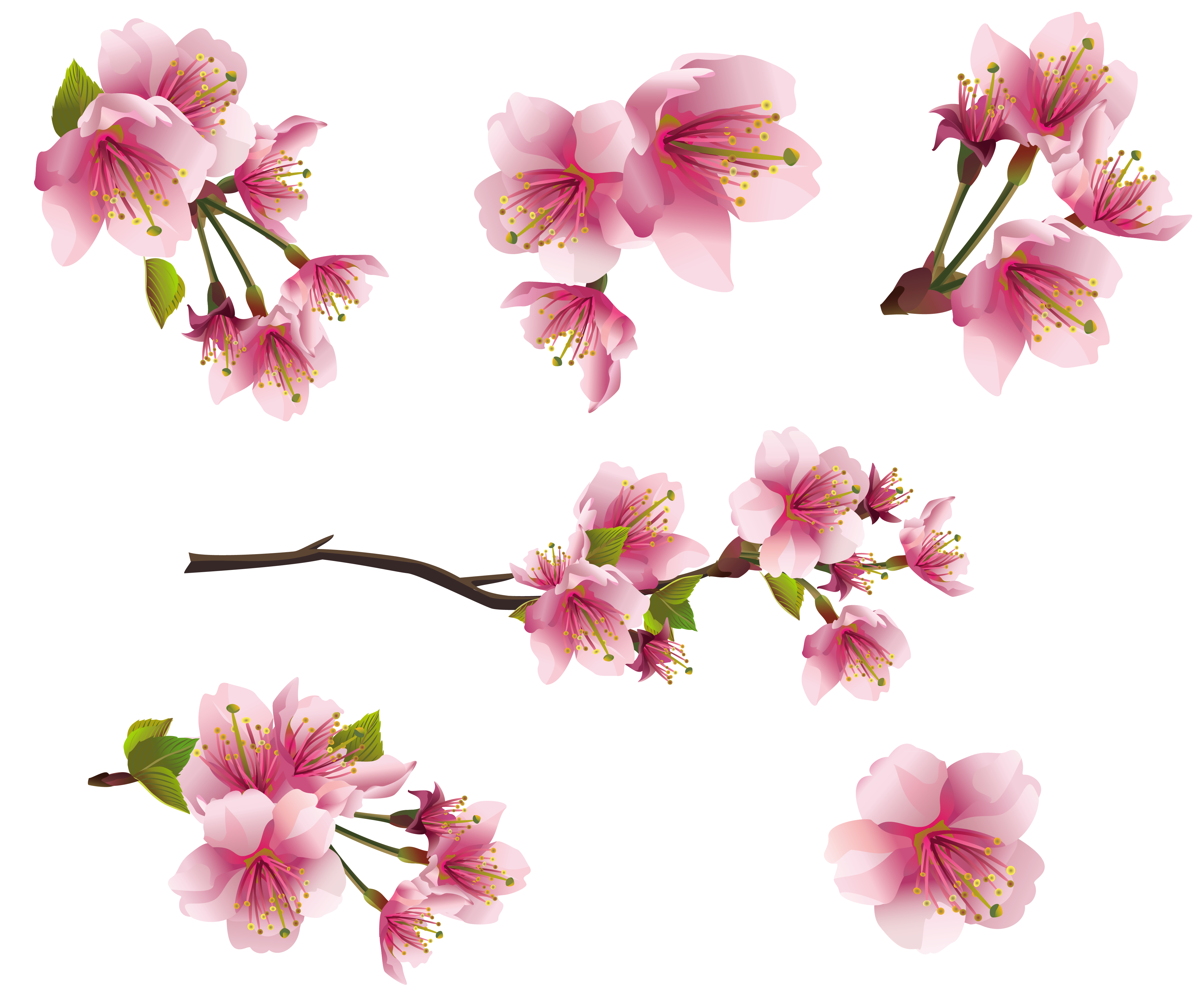 Pics Photos Gallery Free Clipart Picture Spring Png Spring