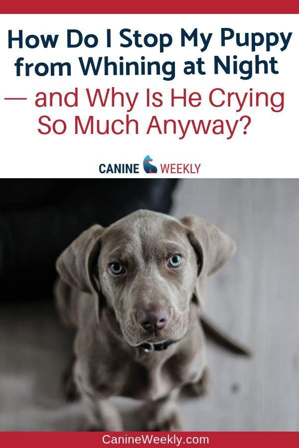 how to stop a puppy crying at night