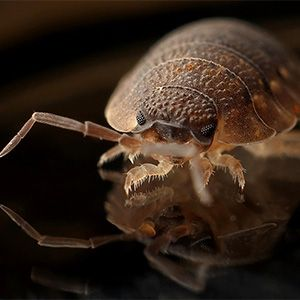 Urgent Pest Control Near Me Residential Pest Control Near Me Bed Bugs Service Near Me Termite Pest Control Near Best Pest Control Pest Control Pest Problem