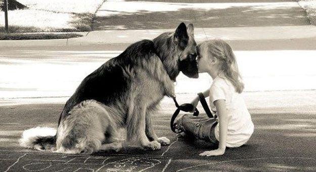 جهاز يترجم نباح الكلاب لمشاعر Dogs Shepherd Dog German Shepherd Dogs
