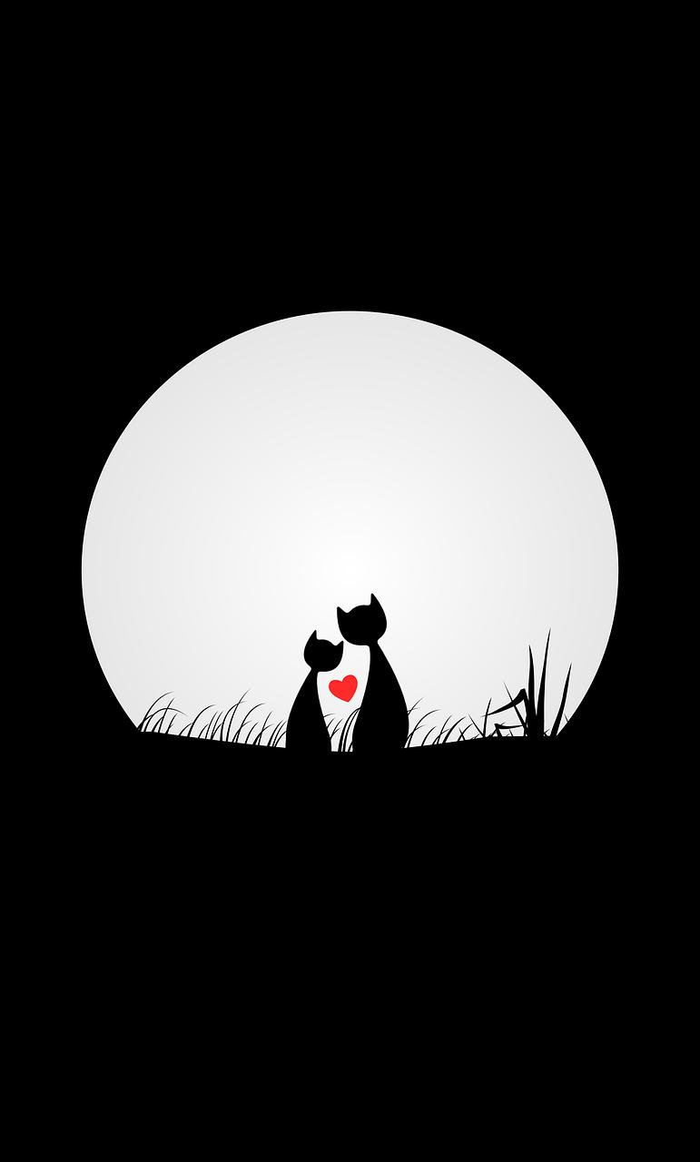Imagen Gratis En Pixabay Gatos El Amor Noche Luna Cats