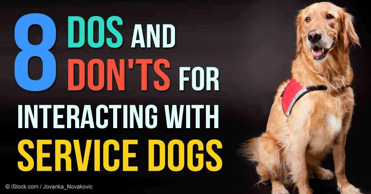 Whether The Dog Is In Service Or In Training To Serve The Rule Of