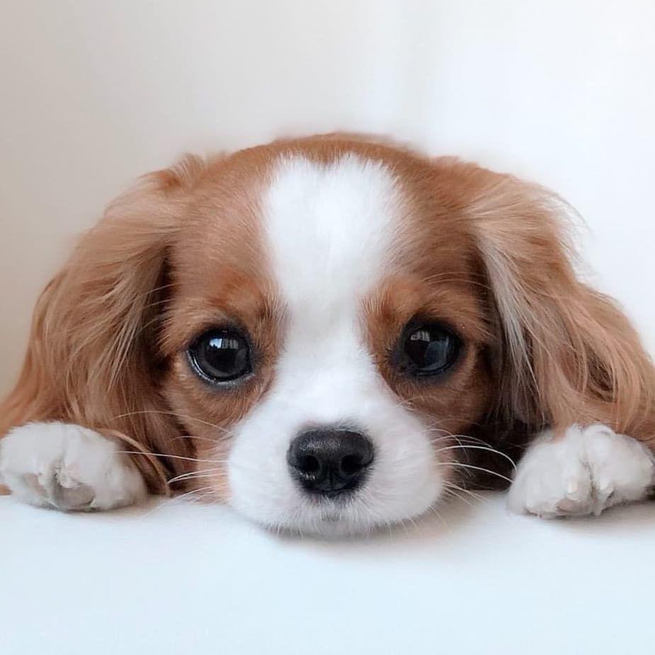 Dog Idea Dog Homes Dog And Baby Dog Projects Dog Cat Dog Ate Dog Home Ideas Home Dog Dog And Pu En 2020 Con Imagenes Cachorros Graciosos Animales Adorables Mascotas Bonitas