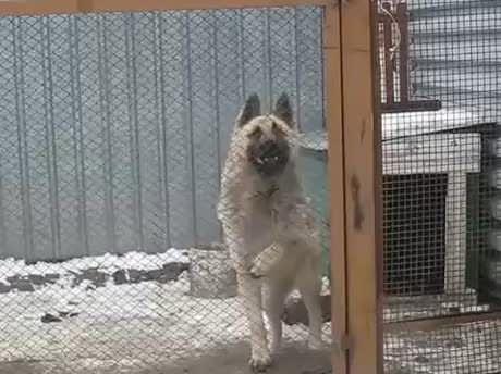 My Dog Is Retarded Dancing Dog Gif Funny Animal Videos Dogs