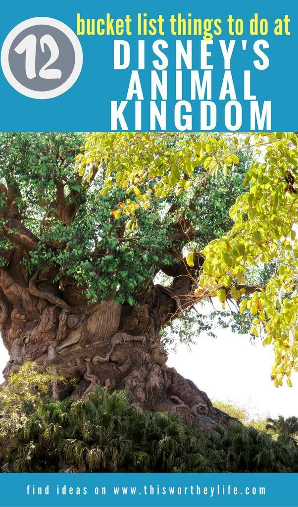 Are you headed to Orlando and looking for the best Things to do in Disney's Animal Kingdom? Look no further than our amazing list chock full of great tips and tricks for making the most of your time at Walt Disney World and Animal Kingdom. #Disney #AnimalKingdom #WaltDisneyWorld #FamilyTravel