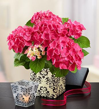 Bird House Of Blooms Pink Hydrangea 800 Flowers Balloon Flowers