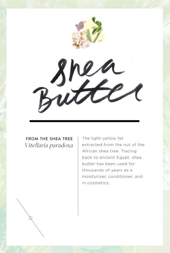 Wellness Encyclopedia: Why You Should Love Shea Butter + DIY Shea Butter Lip Balm – Free People Blog | Free People Blog #freepeople