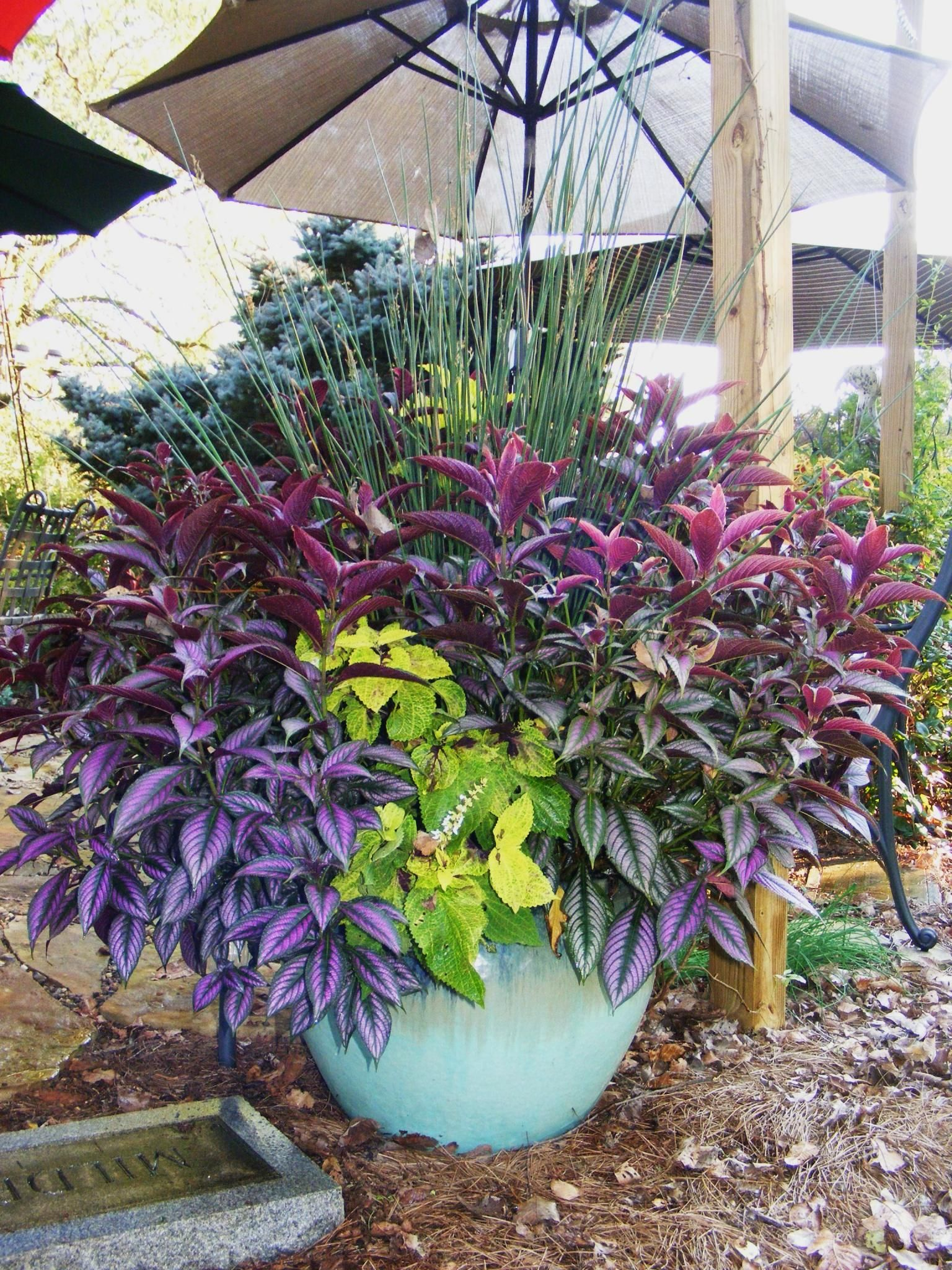 The End Of The Season In Jeffs Tennessee Garden Day 1 Pinterest