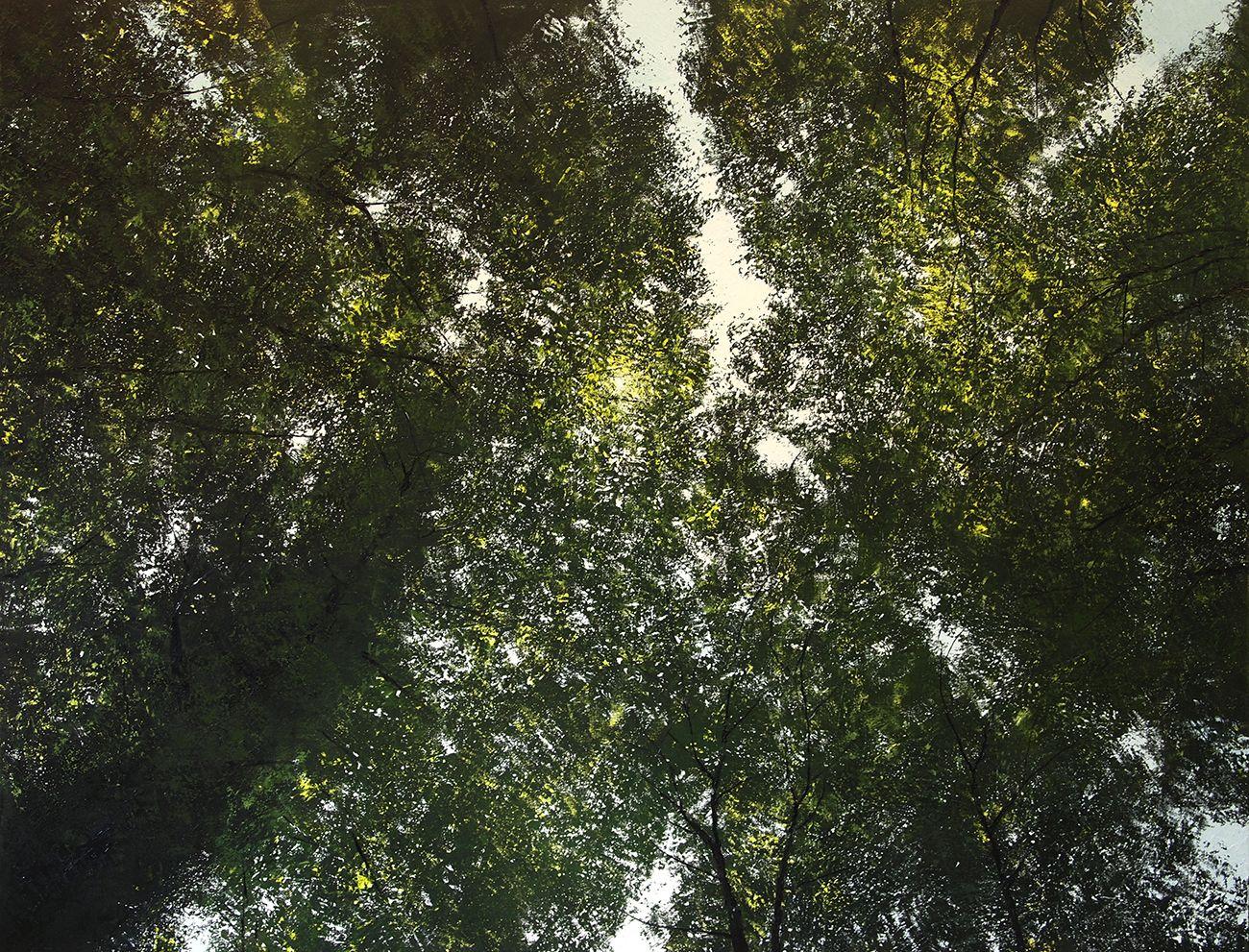 Картинки по запросу old-growth forest