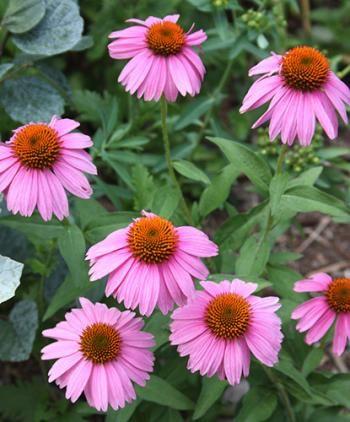 Pin On Pollinator Garden