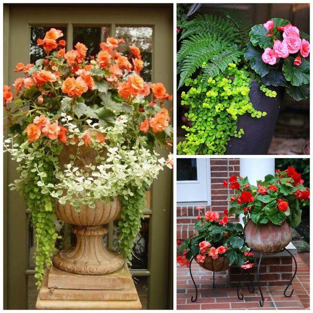 Jakie Kwiaty Posadzic W Maju By Kwitly Do Poznej Jesieni Czyli Kwiaty Na Balkon I Taras Najdluzej Kwitnace D Plants Urn Decor