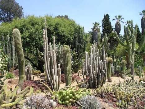 fa83819a83735405ff5c121634675f4f - Botanical Cactus Gardens Las Vegas Nv