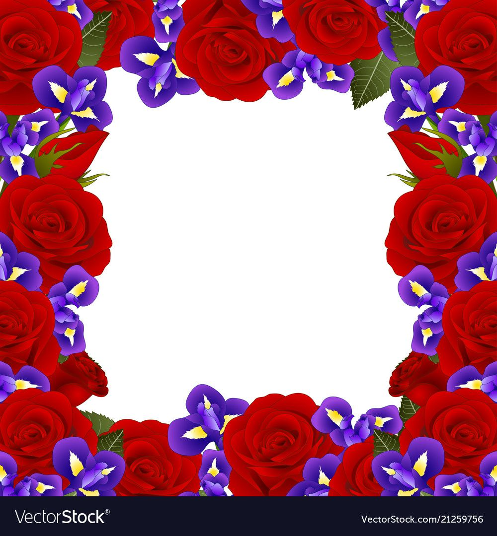 Red Rose and Iris Flower Frame Border. isolated on White