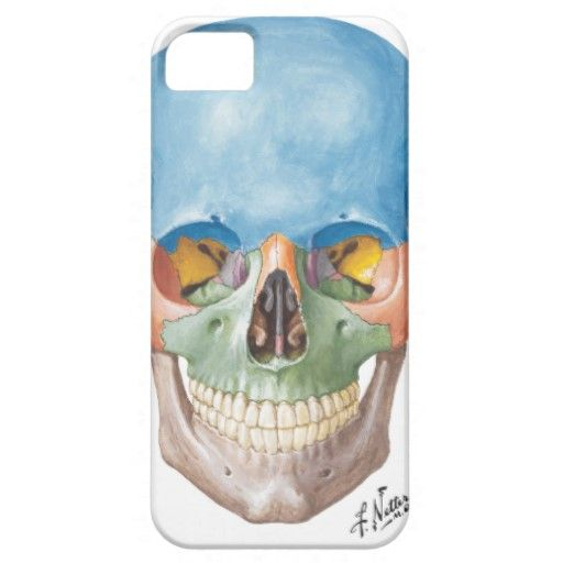 Netter Skull iPhone 5 Case | Pinterest | Human anatomy and Shopping